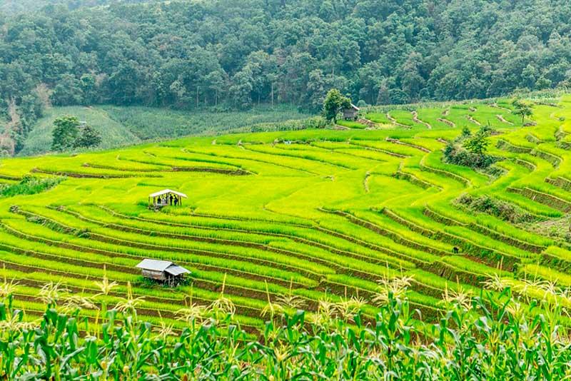Сельское хозяйство в Таиланде