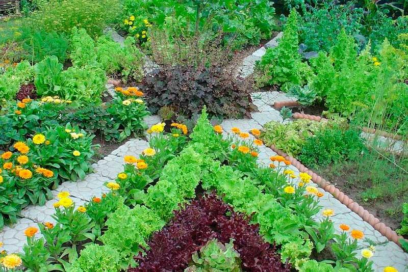 Выращивание пряно–ароматических растений возле дома