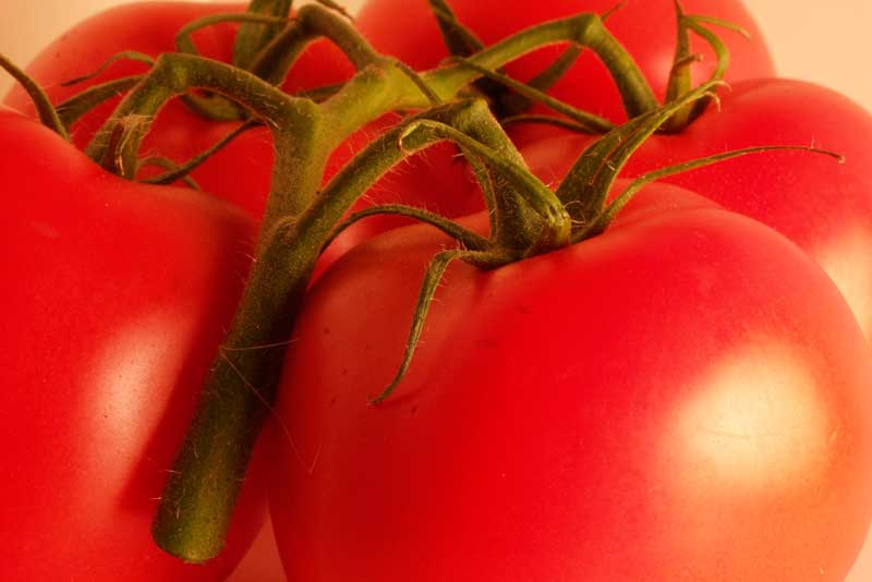 Агротехника и размножение помидоров