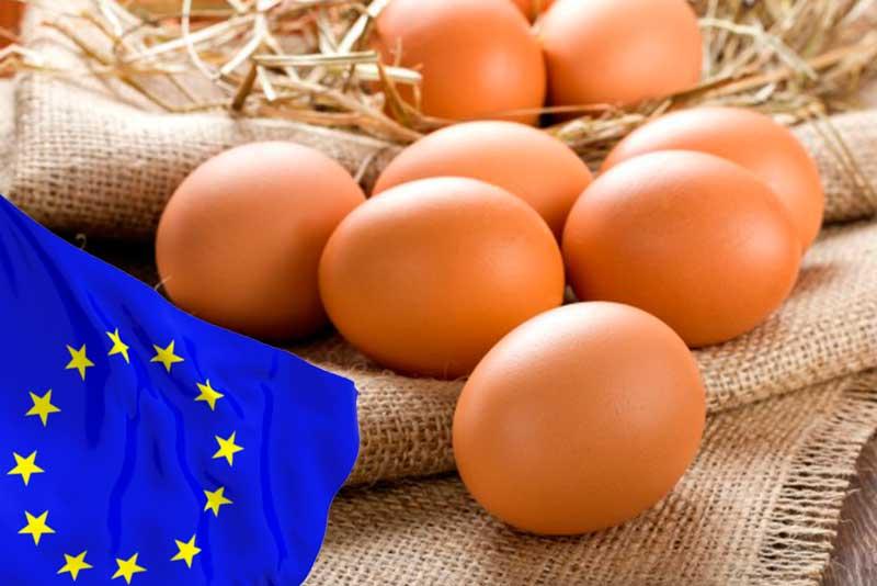 Европейский союз устанавливает стандарты содержания поголовья кур для импорта яиц