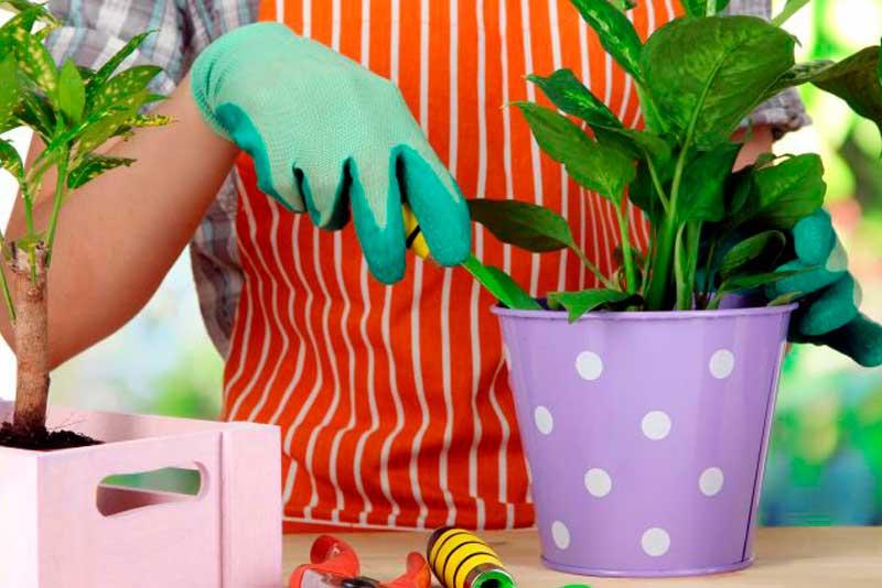 «Золотые» правила ухода за комнатными растениями