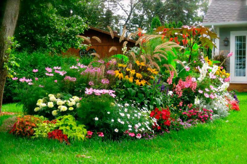 Какие цветы посадить на участке у дома